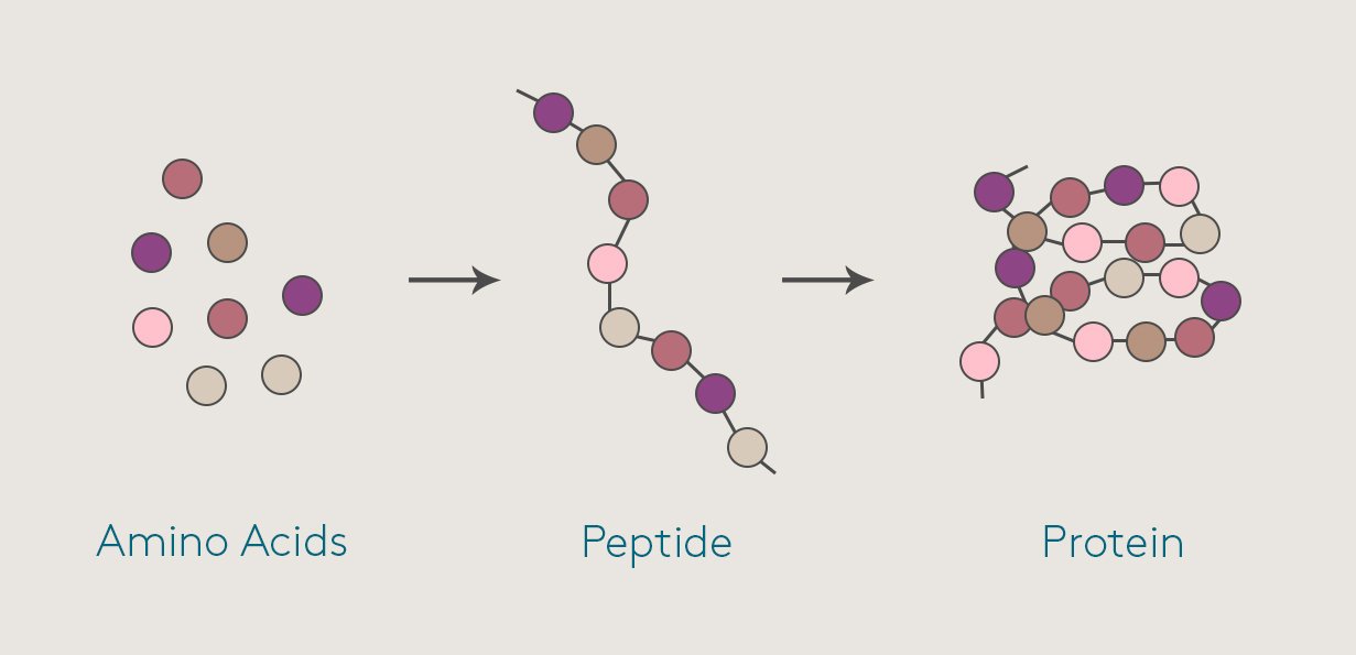 peptides-for-skin